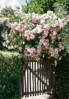 Идеи оформления садовой калитки