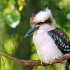 Прекрасные птицы Австралии