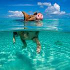 Фотопроект Свиньи на Багамах