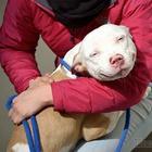 Фотографии собак после того, как их забрали из приюта