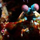 Удивительные подводные обитатели Индонезии, сфотографированные Алексисом Голдингом