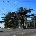 Два дня в ботанических садах Крыма. 1. Никитский Ботанический сад. Бал хризантем