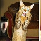Несколько драматичных котов, которым нужно дать «Оскар»