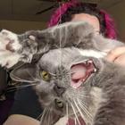 19 смешных кошек, доказывающих, что они существа с другой планеты