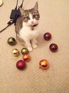 Моя прелесть: 18 котов-воришек, вместе со своими наворованными сокровищами