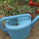 Уход за томатами в августе