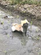 30 смешных песиков-грязнуль!