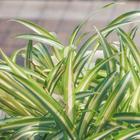 5 комнатных растений, производящих больше всего кислорода