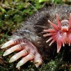 10 необычных существ, которые больше похожи на ошибку природы