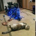 Смешные снимки о веселой жизни с котом