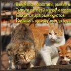 Забавные истории и анекдоты о котах и кошках