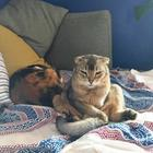 Кошки, с которыми явно что-то не то