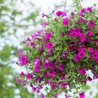 8 растений, которые невозможно убить