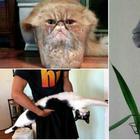 15+ потешных снимков с котами, которые будто не от мира сего