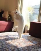 Кот Мирко, который очень любит танцевать