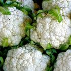ТОП 10 овощей-компаньонов