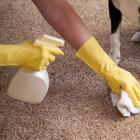 Как избавиться от запаха и пятен мочи домашних любимцев