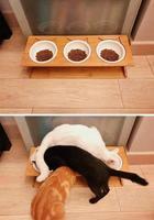 Правдивые фото, которые демонстрируют всю суть жизни с котом