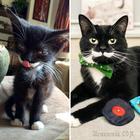 20 фото кошек до и после того, как они нашли дом, показывающих, на что способна любовь