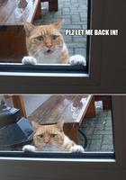 20 смешных домашних кошек, которым очень не нравится гулять на улице