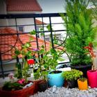 10 самых благоприятных комнатных растений