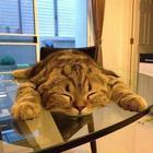 Сон важнее — кошки, которые спят вопреки всему