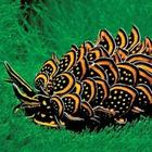 20 самых странных и необычных животных нашей планеты, которых вы точно не видели