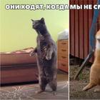 Фотографии, доказывающие, что кошки медленно превращаются в людей