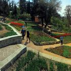 Крым. Никитский Ботанический сад. Выставка тюльпанов и не только