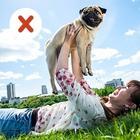 10 ошибок, которые совершают все владельцы домашних животных