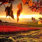 Какая осень! (Стих)