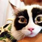 Кошки с уникальным окрасом, который рассмешит и удивит вас
