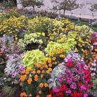 Какие цветы можно сеять под зиму
