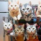 Как складировать и хранить котов: 15 уморительных идей