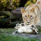 25 милейших моментов нежности между животными и их детенышами