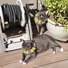 Наглые кошачьи морды, которые хотели показать, кто в доме главный. Но хозяева оказались хитрее