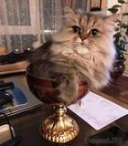 Уморительные коты, которые знают как нарушать правила