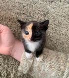 Нереально маленькие котики, которых хочется подержать на ладошке