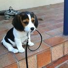 24 снимков самых очаровательных щенков в мире