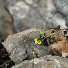 11 самых милых животных в мире, о которых вы вряд ли слышали