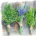 Растения — обереги
