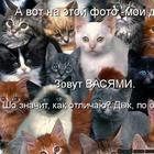 В основном - про котов (продолжение)