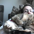 Назойливые коты