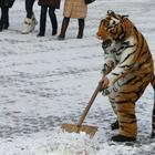 18 фотографий, доказывающих, что в России может случится все что угодно