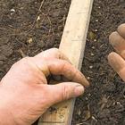 Правильная посадка свеклы семенами в открытый грунт: сроки и схемы посева