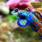 Невиданные морские обитатели