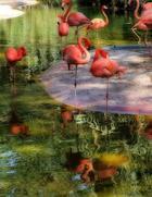 25 ярких фотографии птиц со всего мира, глядя на которые остаётся только восхищаться талантами матери-природы