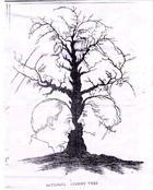 Сколько лиц вы видите на картинке?
