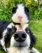20 весёлых историй о собаках, которые настолько же смешные, насколько и милые
