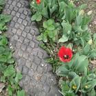 Садовая дорожка из покрышек своими руками